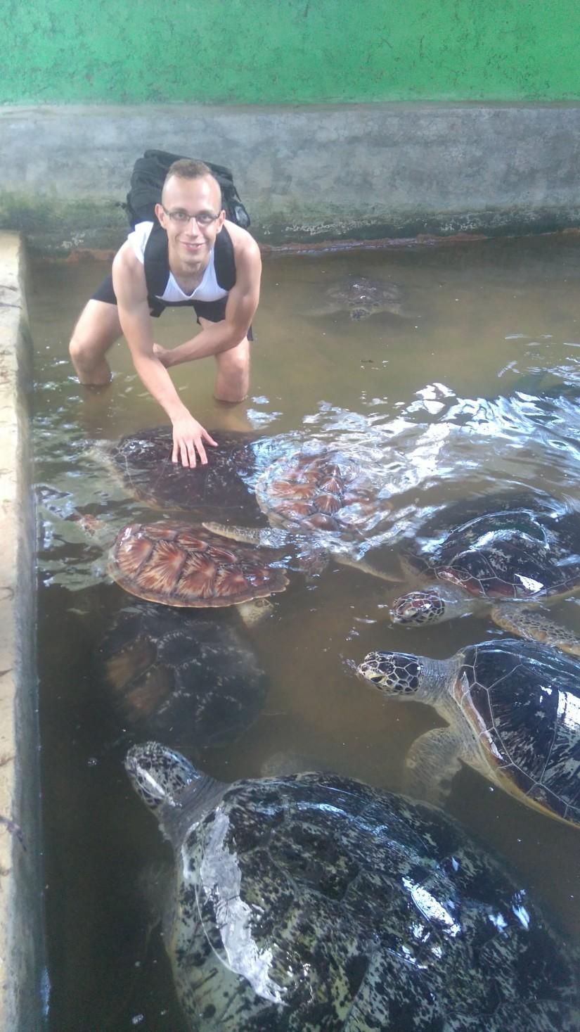 Wyspa żółwi..